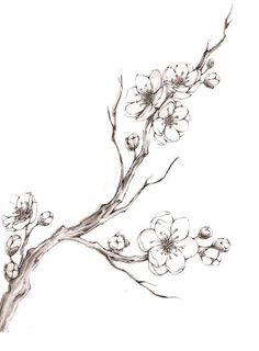 """Résultat de recherche d& pour """"cherry blossom drawing"""" - Pear Blossom, Blossom Trees, Blossom Flower, Flower Art, Cherry Blossom Drawing, Cherry Blossom Tattoos, Cherry Drawing, Blossom Tree Tattoo, Flor Tattoo"""