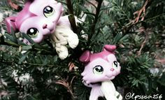 Lps collies 💕💕i Love this Lps