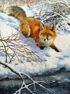 New animal art painting red fox ideas Wildlife Paintings, Wildlife Art, Animal Paintings, Nature Animals, Woodland Animals, Wild Animals, Wolf Hybrid, Fox Totem, Vida Animal