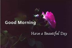 A collection of Beautiful Good Morning Images, beautiful good morning pictures, whatsapp good morning images and quotes. Sweet Good Morning Images, Morning Images In Hindi, Good Morning Picture, Morning Pictures, Friends Image, Happy Birthday Images, Have A Beautiful Day, Cool Baby Stuff, Picture Quotes