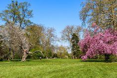 Castle, Park, Landscape, Nature, Flower, Tree #castle, #park, #landscape, #nature, #flower, #tree