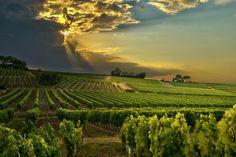 beautiful Bergerac vineyard in the Dordogne France France Map, South Of France, African Goddess, Paraiso Natural, Saint Emilion, Dordogne, In Vino Veritas, Cabernet Sauvignon, Wine Country