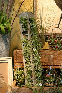 air plants in chicken feeder. Saw this at Ravenna Gardens in Bellvue WA in July.