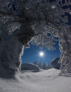 Snow by Moonlight