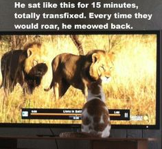 ツ he must be a tiny house lion. Lol