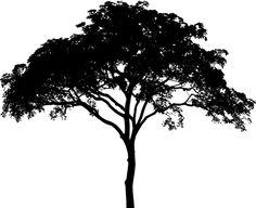 Free Image on Pixabay - Tree, Plant, Vegetation, Arbor Free Pictures, Free Images, Black Soil, Acrylic Painting Inspiration, Gastro Pubs, Photoshop, Beautiful Park, Tree Silhouette, Plantation