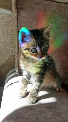 """mllesarcasme: """" So my baby cat found himself stuck in a rainbow today """""""