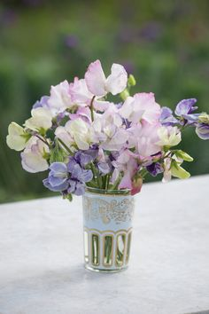 A collection of long-flowering newly bred varieties of sweet pea, which still have good scent in a beautiful range of pastel colours. This exclusive collection includes: 'Frances Kate', 'Hi-Scent' and 'Anniversary'.