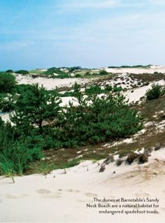 Dunes at Sandy Neck Beach