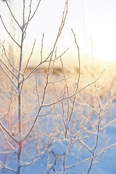 Branches Lightly covered in Snow by Arkku, via Flickr
