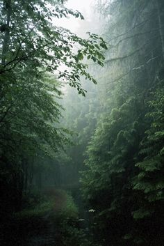 It is not so much for its beauty that the forest makes a claim upon our hearts, as for that subtle something, that quality of air, that emanation from old trees, that so wonderfully changes and renews a weary spirit ~ Robert Louis Stevenson