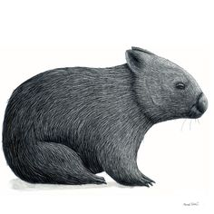 Renee Treml – Wombat 2 – limited edition fine art print of original scratchboard illustration by Renee Treml.  Printed locally on environmentally-sustainable fine art paper. • See more at The Big Design Market on 6/7/8 December 2013 – Royal Exhibition Building, Melbourne.  www.thebigdesignmarket.com