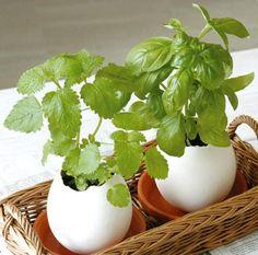 Creative DIY Mini Lucky Egg Potted Plant Office Desktop Home Decor by Desktop Decor, Office Desktop, Mini Plants, Potted Plants, Home Office, Yard Waste, Office Plants, Garden Supplies, Plant Care