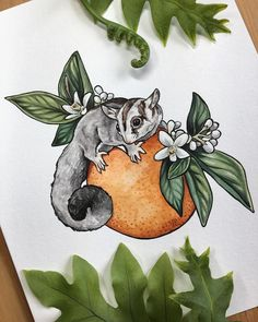 "V E R O N I C A S T E I N E R on Instagram: ""Sugar glider watercolor for some Florida squirrels @sugar_flavored 🍊 . . . #vsteinerart #floral #floridaartist #illustration #sugarglider…"""