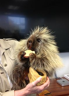 Teddy Bear the Talking Porcupine Visited the Observer and It Was Magical. (Video)