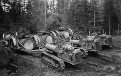 Caterpillar Sixty tractors pulling trailers with large single-log loads. Operations of Red River Lumber Company, California