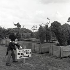 Taken a few months before the opening of Walt Disney World Resort in 1971, this photo shows Mickey hanging out with a few of Magic Kingdom Park's first topiaries.