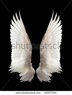 Wings Stock Photos, Images, & Pictures | Shutterstock