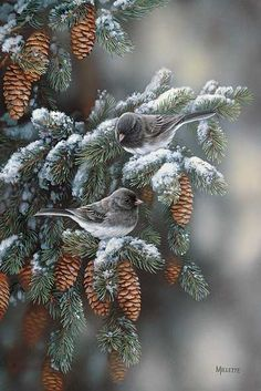 Winter Gems-Juncos by Rosemary Millette