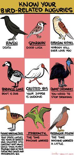 Know your bird auguries. The time machine worked! The time machine worked a little. Passenger Pigeon, Wedding Planning Quotes, Wedding Quotes, Wedding Humor, Smbc Comics, The Awkward Yeti, Bird Sightings, Funny Memes, Hilarious