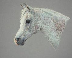 The fleabitten grey, Horses, Julie Holliday, SAA Professional ...