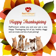 Team @PetPremium wishes all our friends #dogs & #cats #pets  a wonderful #Thanksgiving !