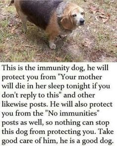 Safe travels, take immunity doggo with you - Daily LOL Pics Dankest Memes, Funny Memes, Hilarious, Pet Memes, Funny Animals, Cute Animals, Fandoms, Dumb And Dumber, In This World