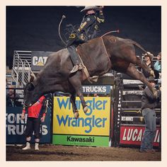 Douglas Duncan on Asteroid. Just look at how high that bull can leap! Can you imagine how powerful he is? Cowboy Horse, Cowboy And Cowgirl, Cebu, Professional Bull Riders, Rodeo Time, Bucking Bulls, Rodeo Cowboys, Charro, Bull Riding