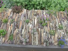 Crevice garden in trough, RHS Wisley UK.