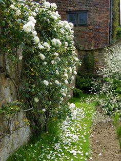 White walled garden
