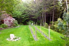 possible diy backyard vineyard?
