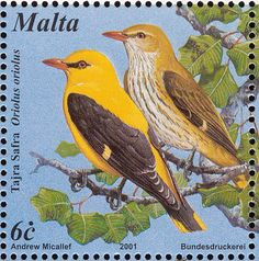 Eurasian Golden Oriole stamps - mainly images - gallery format