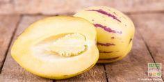 Originaire des Andes la poire melon (Solanum muricatum) est une belle plante vivace, buissonnante mais gélive et donc cultivée en annuelle en France. Solanacée surprenante et méconnue, cousine de la tomate, de l'aubergine, de la pomme de terre….voici un légume-fruit à découvrir pour varier les saveurs au potager.  http://www.jardipartage.fr/poire-melon/