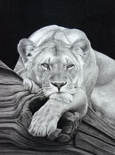 Daydreaming (Pencil on paper) by StephenAinsworth on deviantART   background and log ~ wolfs carbon pencil........ tombow mono ~ lion