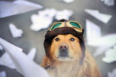 When Dogs Fly 22/52 by sprinkle happiness, via Flickr