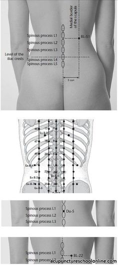 Vitals Gate HUANGMEN - Acupuncture Points] 3 cun lateral to the posterior midline, on the level of the lower border of the spinous process of the lumbar vertebra Acupuncture Points Chart, Meridian Acupuncture, Reflexology Points, Acupuncture Benefits, Massage Benefits, Acupressure Points, Massage Tips, Animals, Massage