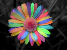 Rainbow Daisy by ~secretgal1234 on deviantART