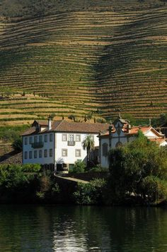 Quinta do Vesúvio - Produtora de Vinho do Porto. Portugal
