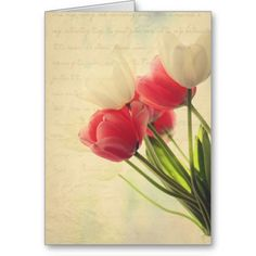 pink and white tulips card