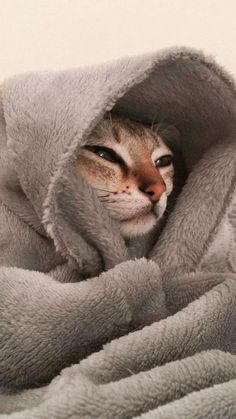 cat wallpaper Here are some common behaviors your cat is likely to exhibit, and what it probably means when hes doing them. 7 Ways To Read Your Cats Mood Wallpaper Gatos, Funny Cat Wallpaper, Animal Wallpaper, Iphone Wallpaper Cat, Cute Cats And Kittens, Baby Cats, I Love Cats, Kittens Cutest, Cute Funny Animals