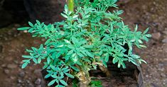 Plantas para Atraer el dinero y amor Healthy Life, Herbalism, Amor Youtube, Zodiac Mind, Anti Stress, Hd Video, Wicca, Reiki, Ideas Para