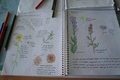 I really need to start nature journaling WITH Holly!!! What a great example to share!