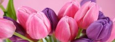 Flowers Tulips Facebook Covers | www.TimelineCovers.pro