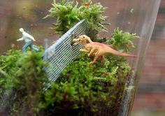 thepeagreenboat_TwigTerrariums_06