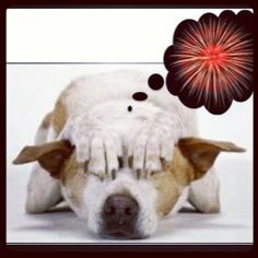 Keep Pets Safe On July 4th: Fireworks are very loud and scary! Keep pets indoors! More pets go missing on July 4th than any other year. Keep your loved ones safe.