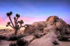Belle Campground in Joshua Tree National Park - the most beautiful campground in California?
