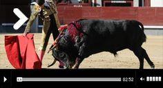 MADRID Finalista con Cerro y Brandon Campos A Tomás Campos le bastó con un novillo... - Mundotoro.com #toreros #toros #videos #fotos