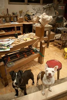Tim's dogs help him out in his studio.