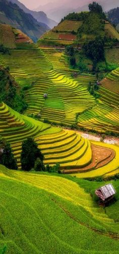 The terraced rice fields of the Muong Hoa Valley near the town of SaPa in northwest Vietnam. Places Around The World, Oh The Places You'll Go, Places To Travel, Places To Visit, Around The Worlds, Vietnam Voyage, Vietnam Travel, Asia Travel, Beautiful World