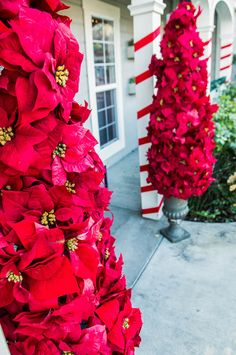Make these Entryway Poinsettia Trees from Kenneth Wingard! Tune into – Outdoor Christmas Lights House Decorations Christmas Tree Flowers, Poinsettia Tree, Christmas Topiary, Christmas Porch, Outdoor Christmas Decorations, Winter Christmas, Christmas Lights, Christmas Holidays, Christmas Wreaths